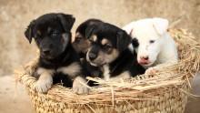 JSPCA Calendar Puppies