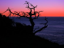 A tree silhouette against a sunset over Pacific ocean, San Francisco, CA