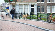 A service dog takes his master and his monkey toy for a walk along the Lijnbaansgracht canal in Amsterdam